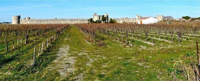 Weinanbau rund um Aigues-Mortes