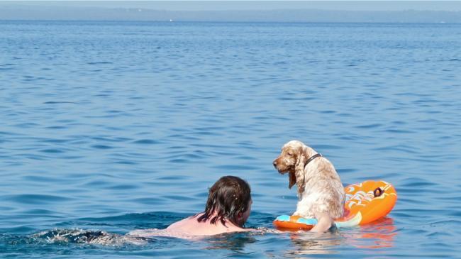 Baden mit Hund in Veli Lošinj