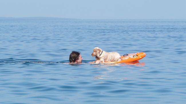 Baden mit Hund in Veli Losinj