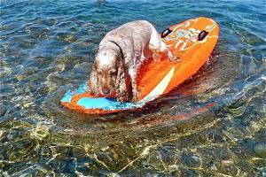 Mit Hund baden in Veli Losinj