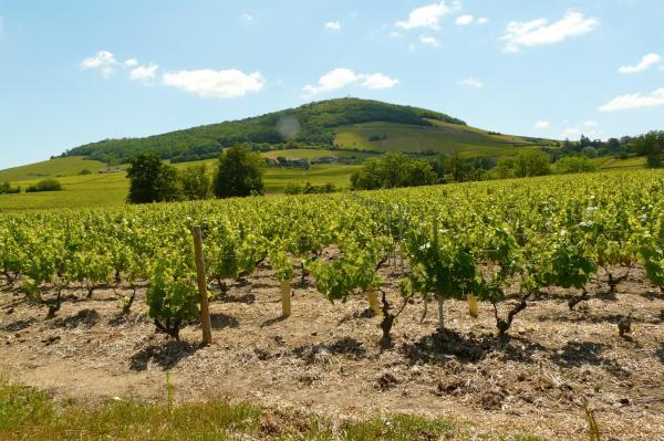 Tour durch das Beaujolais
